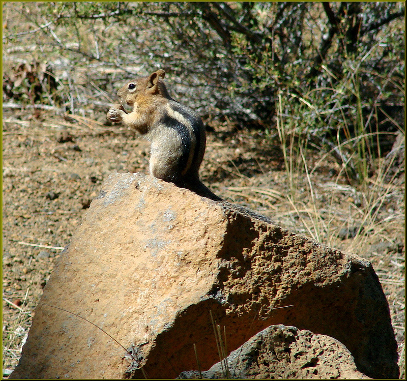 outdoor fun, chip and dale, chipmunk, playing outside, nature, wild life, environment