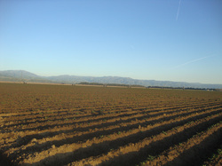 California, crops, farms, farmland, food supply, livestock, fruits, vegetables, nuts