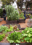 garden, food garden, composting, growing food, plants, backyard garden, going green, sustainability