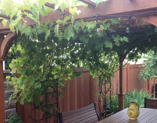 wine, grapes, going green, going true green, grape vines, grape jam, eating grapes, amish, peaceful valley, pergola, Lancaster County, Pennsylvania, LED, LEDs, red grapes, patio, Peaceful Valley Furniture